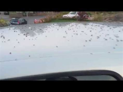 ants in car thousands of ants invade my car ant swarm