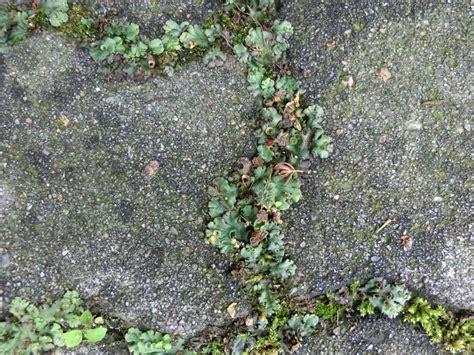 Kleine Weisse Pilze Im Garten by Was W 228 Chst Da Pilz Flechte Moos Mein Sch 246 Ner Garten
