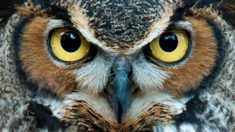 see who s new on the great horned owl cam explore