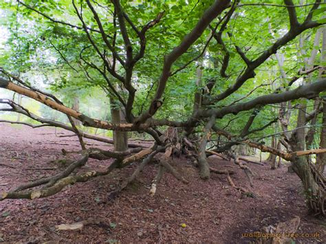 Woodland Tree - felled tree branches trees woodland and forests wallpaper