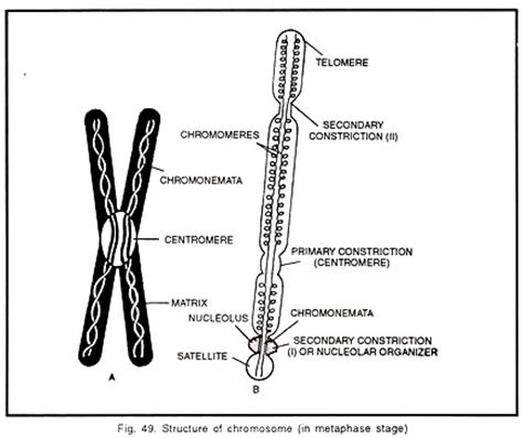 what is a section of a chromosome called 6 main parts of a chromosome