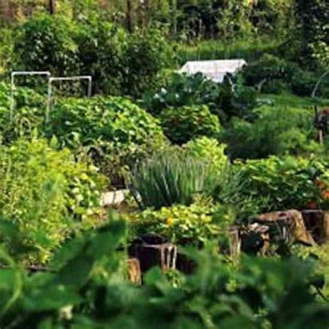 Build Better Garden Soil With Free Organic Fertilizers Organic Vegetable Garden Soil