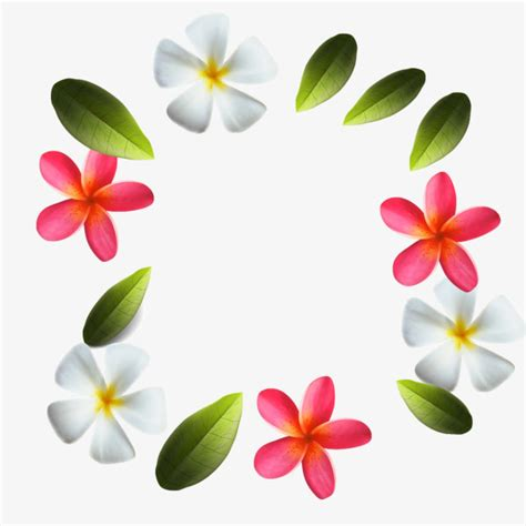 plumeria vector plumeria vector plumeria leaves png and vector for free