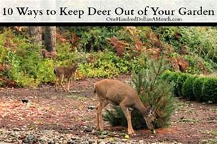 what to feed deer in backyard how to keep deer out of your garden stop feeding them