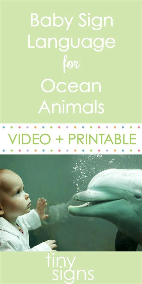 baby shark in korean language baby signing for ocean animals whale sharks ocean and