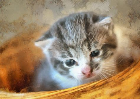 99 q to u animals collection stock images page everypixel baby animals images of baby animals domain