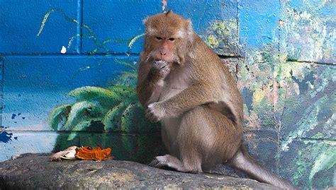 folsom zoo lights 2017 macaques folsom zoo