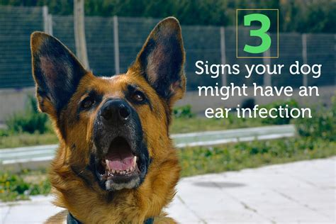 how to tell if has ear infection 3 signs your might an ear infection and what to do about it oxyfresh