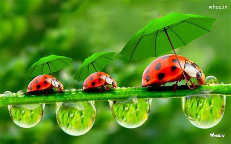 bug three three bugs with green umbrellas hd insects fun wallpaper