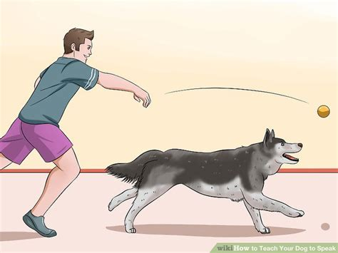 how to a to not bark at strangers how to your not bark at the door the best of 2017