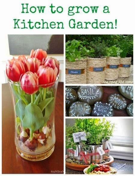 grow herbs in kitchen kitchen garden ideas growing herbs and the plant on