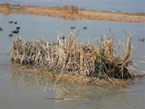 goose boat dog best 25 goose blind ideas on pinterest duck blind duck