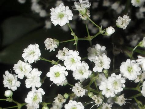 small tiny macro photos white and very little white flowers i
