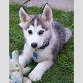 Cute Puppy Dogs...