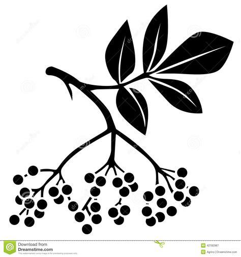 clipart picture black elderberry stock vector image 42182987
