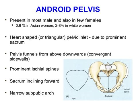 android pelvis applied anatomy of pelvis and fetal skull