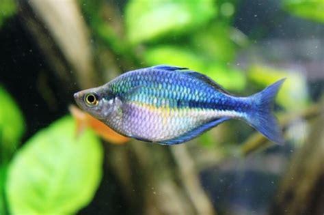 Permalink to Reef Aquarium Supplies – Featured Reef Tank: Cody's 120 Gallon Zoa Garden   YouTube