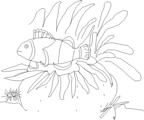 Sea Anemone Coloring Page clownfish in sea anemone