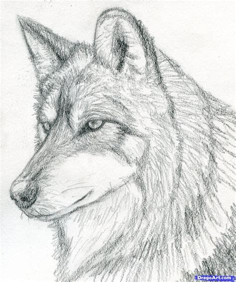 Drawing Wolf by How To Draw A Wolf Mexican Wolf Step By Step