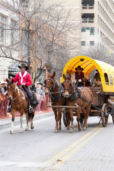 Mibil Rodeo western heritage parade cattle drive san antonio stock