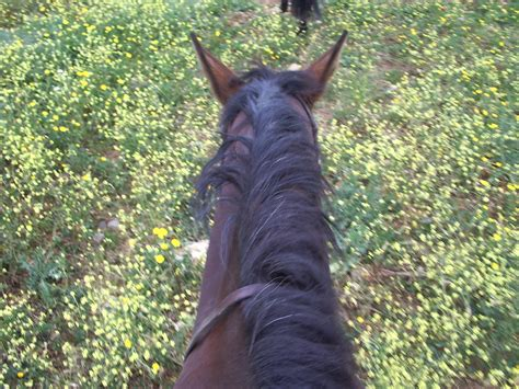 why does it take so long to buy a house learning to ride why does it take so long to learn how to ride thistle ridge