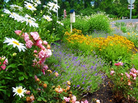 Small Butterfly Garden Ideas Photograph Butterfly Garden Butterfly Flower Garden