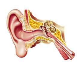 pr 243 tesis auditiva y dispositivos de ayuda o 237 do bi 243 nico