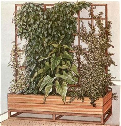 plant room divider plants as room dividers