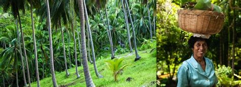 Detox Vacation by Detox Vacations Sassy Hong Kong