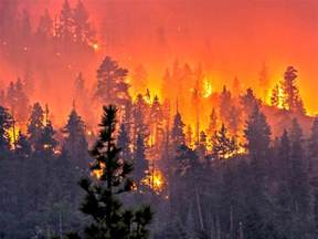 Armchair Car 15 Videos Of The California Wildfires The Organic Prepper