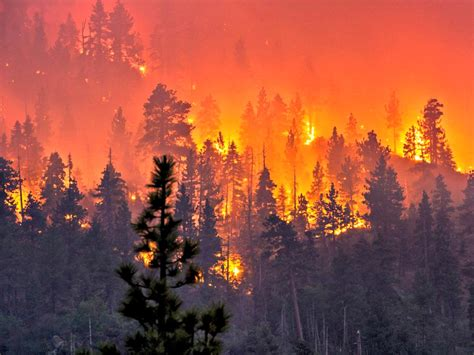 Forest Armchair 15 Videos Of The California Wildfires The Organic Prepper
