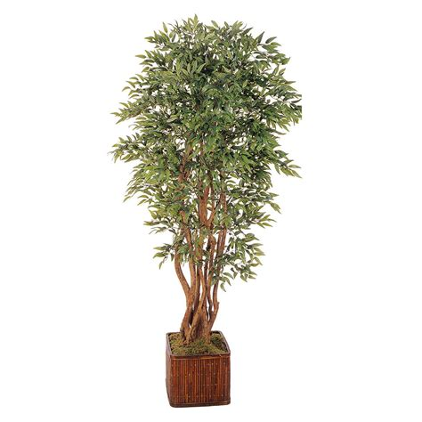 overstock trees 5 foot ruscus tree potted overstock 1849