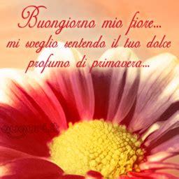 immagini buongiorno con fiori immagini di buongiorno con fiori fiori idea immagine