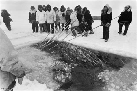 The Miracle Season True Story 1988 Logbookwasilla Logbookwasilla The Big Miracle And What I Witnessed In Real