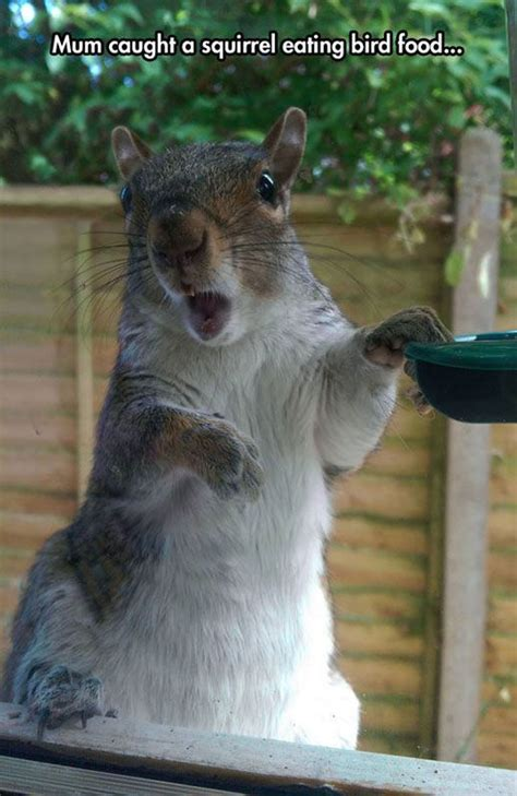 caught  squirrel eating bird food pictures   images  facebook tumblr pinterest