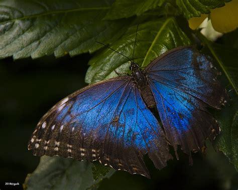 butterfly garden niagara falls butterfly niagara falls butterfly conservatory flickr