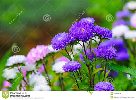 beautiful spring flowers stock images image