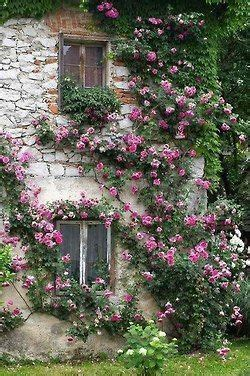 Country Cottage Plants by 25 Best Ideas About Cottage Garden On