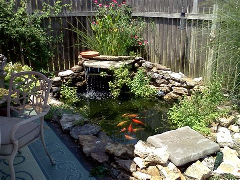 my backyard fish pond water gardens pinterest