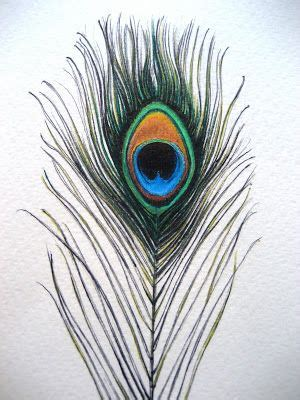 pretty peacock feather drawing creativefan 17 best images about quill tattoos on drawings