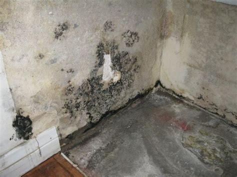 Wallpaper Black Mould   download black mold under wallpaper gallery