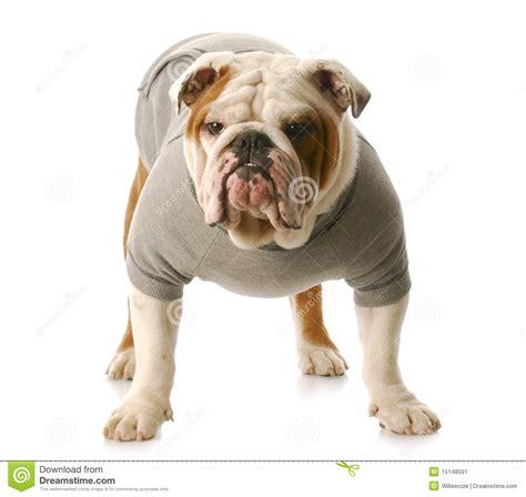 tough puppy tough stock image image 15148591
