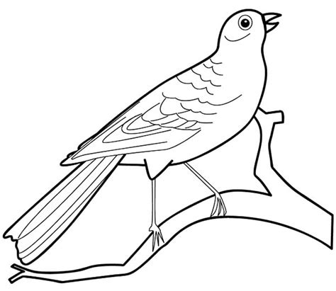 coloring pages for quail printable bird coloring pages coloring me