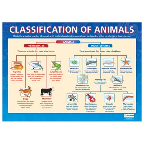 printable animal classification chart classification of animals