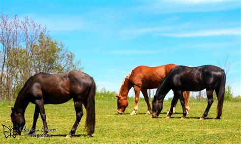 Field Mats Horses For Sale by Horses In Field Swartz Photography