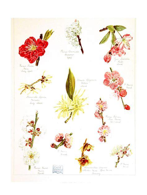flower design education remedies in bloom sorcery to science
