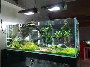 825 best images about aquariums on planted
