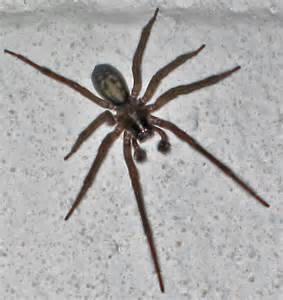 how to get rid of basement spiders how to kill spiders in basement 28 images how to get