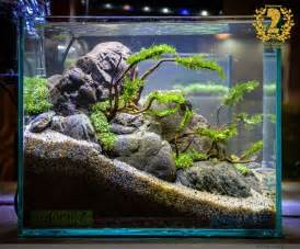best 25 aquascaping ideas on aquarium
