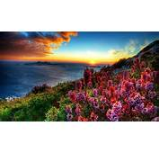 Coastal Flowers At Sunset Hd Wallpaper 604545